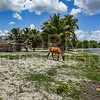 Horse Grazing on Shore