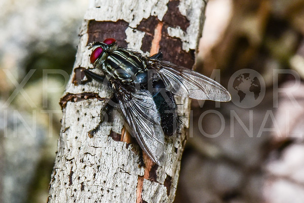 Flesh Fly - Need ID
