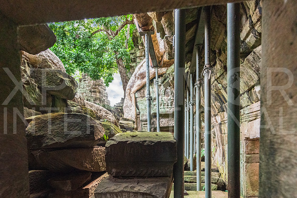Conservation at Ta Prohm Temple