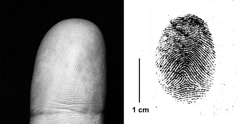 Comparison of a Finger and its' Corresponding Fingerprint