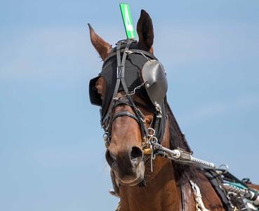 Lukes Cowboy