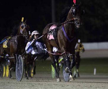 Filibuster Hanover, Courtly Choice