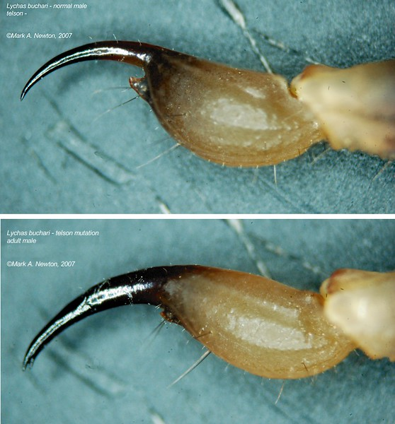 Lychas buchari  (Vesicle mutation comparison)