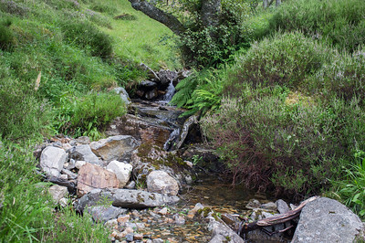 A stream or brook