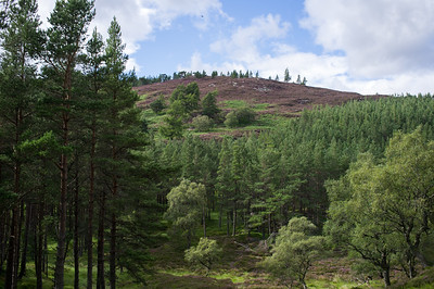 Pines, Heather and Hills