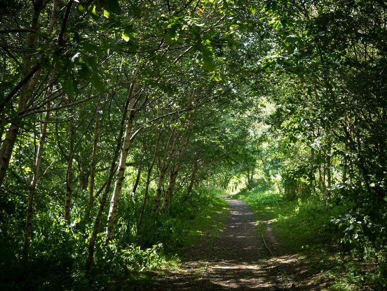 Woods around the Loch of Forfar