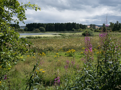 Lots of meadowland around the Loch of Forfar