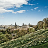 Daffodils in Edinburgh