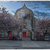 Cherry Blossom at Canongate Church