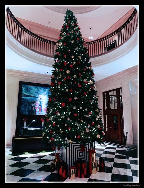 The Christmas Tree at the Edinburgh Grand