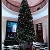 The Christmas Tree at the Edinburgh Grand