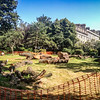 Moray Place Gardens