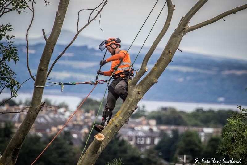 Tree Felling in Edinburgh's New Town