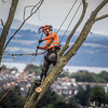 Tree Felling in Edinburgh's New Town