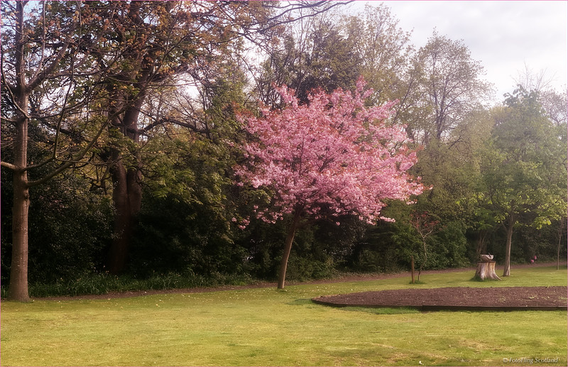 Blossom in Royal Circus
