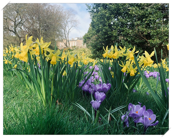 Spring Flowers at the Botanical Gardens, Edinburgh
