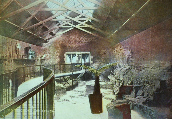 Fossil Grove 1887