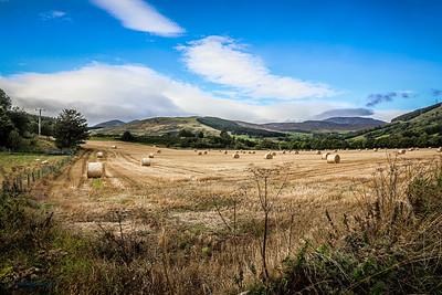 Harvest in Strath Tay