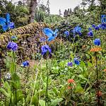Explorers' Garden, Pitlochry