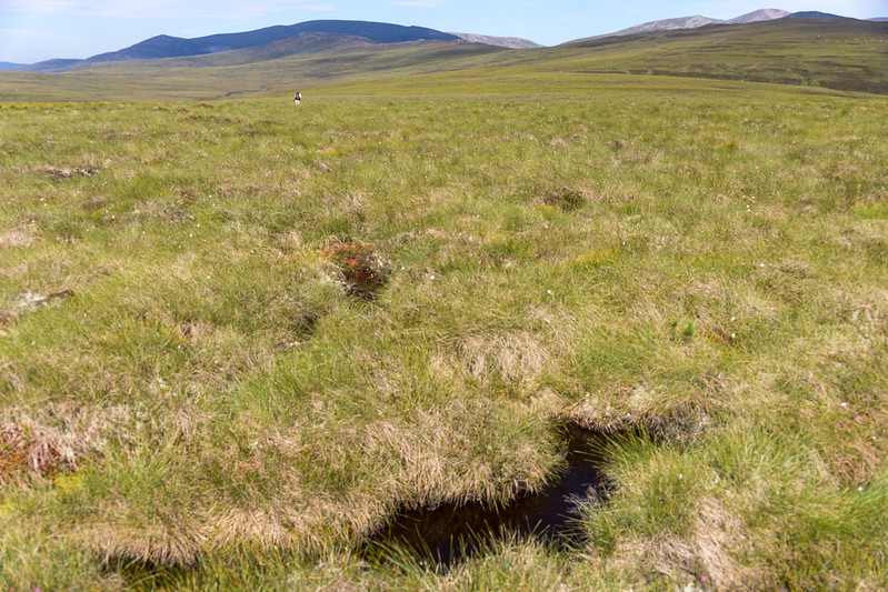 And then some bogs.  Still no trail.