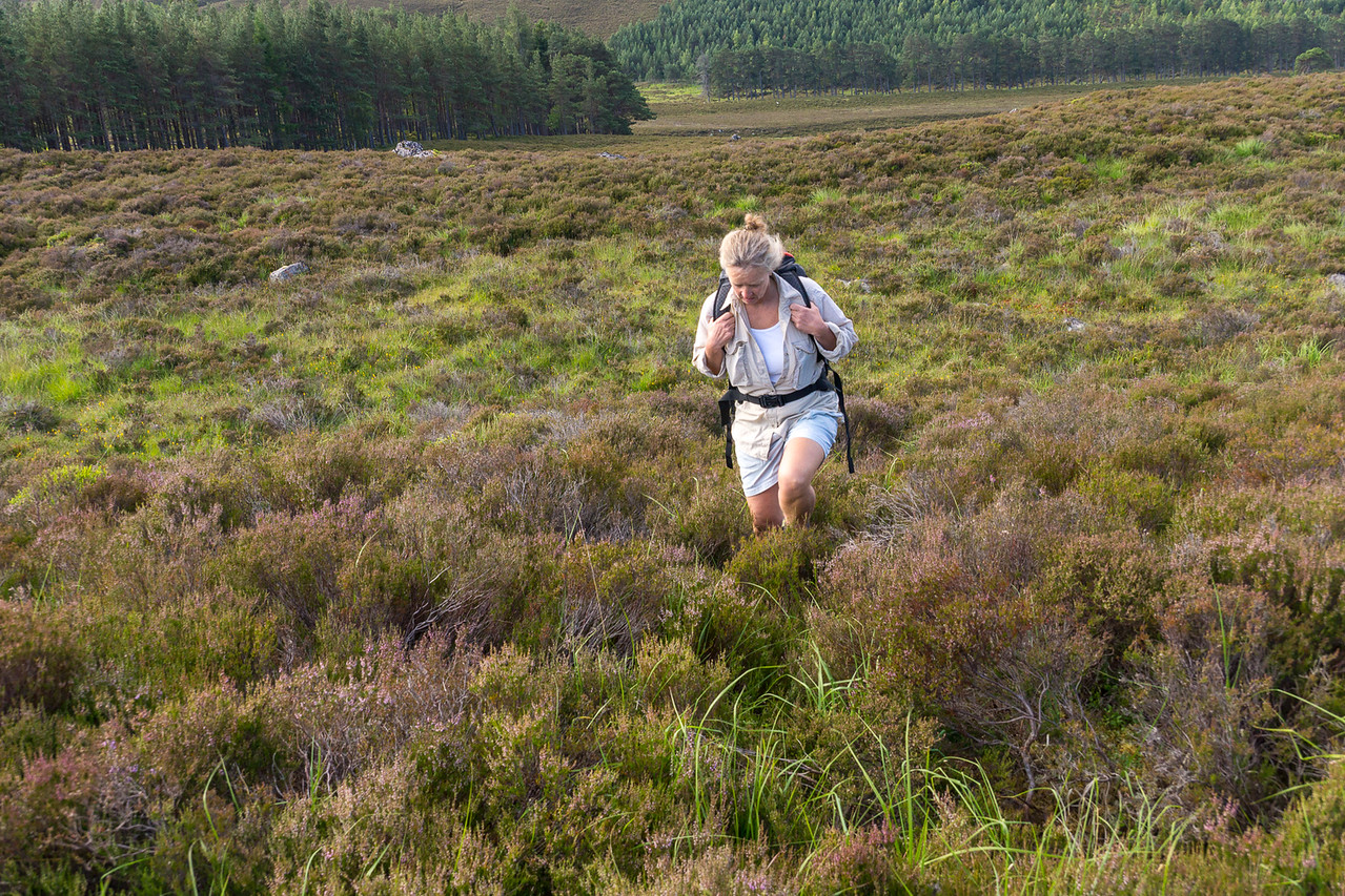 The first few kilometers up a steep slope covered in deep heather - no trail