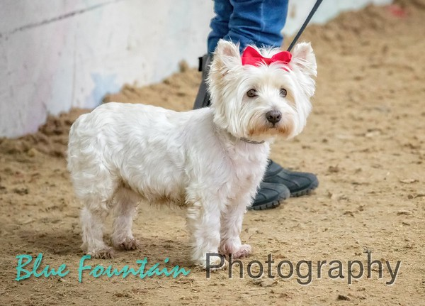 Fun Dog Show at Muirfield Riding Academy