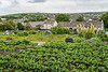 A small vegetable garden in Kikrkwall, Orkney, Scotland, United Kingdom, Europe.