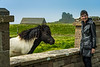 A Shetland Pony at the Jarlshof prehistoric and Norse settlement archaeological site in Shetland, Scotland, United Kingdom, Europe.