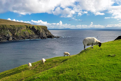 Sheep on Glencolmcille