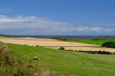 Barley fields, Islay