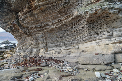 Sea shell strata, Elgol.