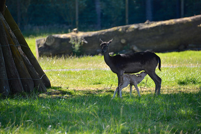 Blair Drummond Safari Park July 2014