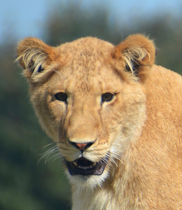 2014 Blair Drummond Safari Park