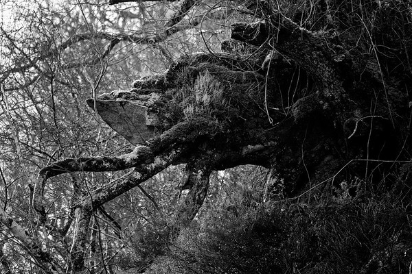 Forest Creature, Knapdale, West Coast, Argyll, Scotland.