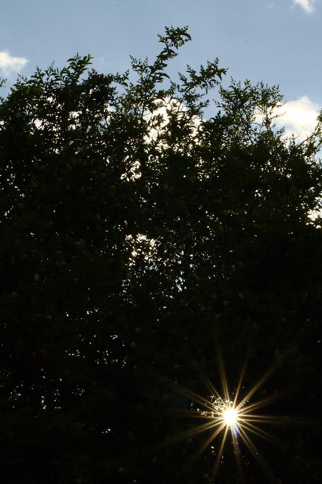 Sun peeking through the hedges