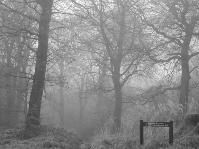 Bluebell Woods in the fog