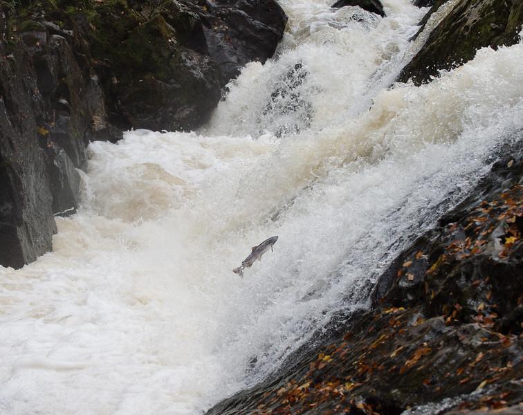 Bridge of Feugh, salmon leap