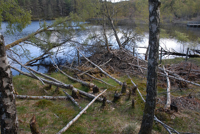 15. May 2010 Aigas Loch (Loch Cuil Na Caillich) The Beaver Hide
