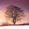 Lone Tree on Calton Hill at Sunset in Winter