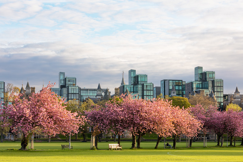 The Meadows Overlooking Quartermile in Spring