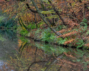 Autumn woodland on the Union Canal