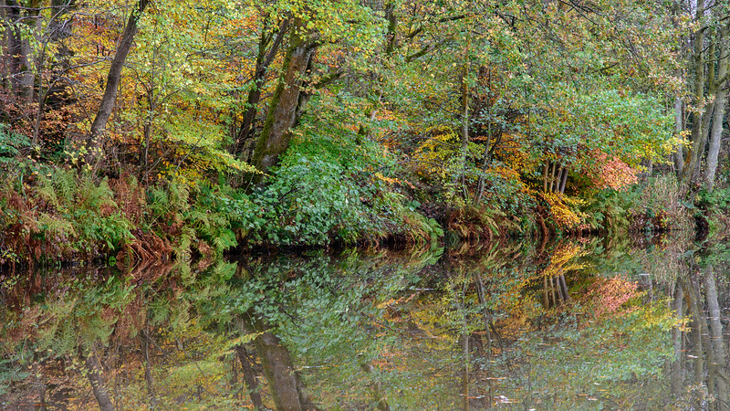 Autumn woodland on the Union Canal