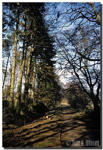 2199_UK-1-0008-NCS-Scotland.jpg : Pathway on the Hirsel Estate, Coldstream, Berwickshire