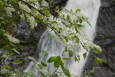 The Falls of Foyers (Loch Ness)