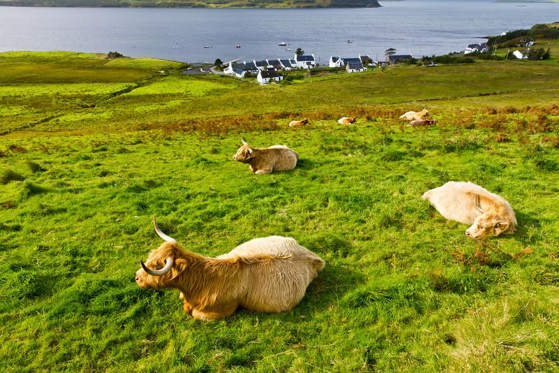 SCOTLAND-ISLE OF SKYE-LUSTA