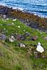SCOTLAND-ISLE OF SKYE-DUNTULM