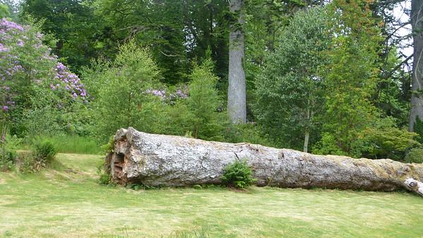 Clan Donald Skye woodlands