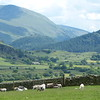 Flock of sheep near Castlerigg Stone Circle