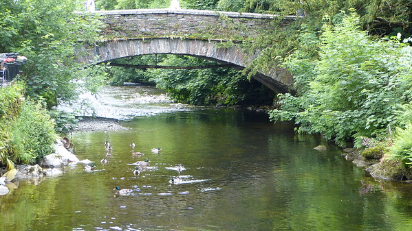 Derwent River duckies in the Cumbria area... quack quack