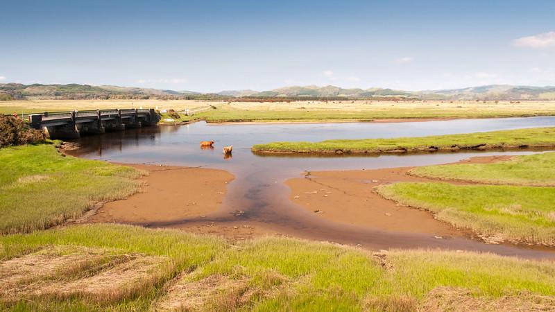 Coos in Crinan river